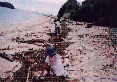 浜辺のごみ 3