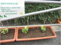 植えられているのはハニーサックル