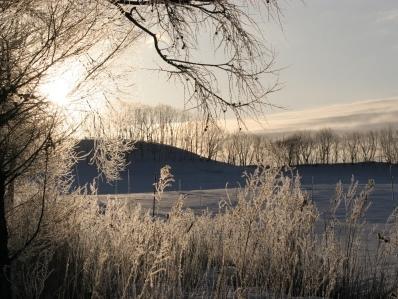 釧路の草原