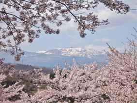 桜と吾妻連峰(吾妻子富士、一切経山